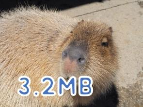 デジカメで撮影した写真(3.2MB)